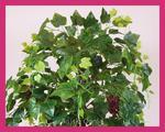 sztuczne drzewko WINOGRON winorośl OWOC 170cm w sklepie internetowym Rajskiogrod.info.pl