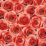 Serwetka - Róże - 6902 Bordowa (kpl. 20szt) w sklepie internetowym naSlub.pl
