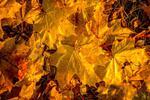 Fototapeta jesień liście 738 w sklepie internetowym Deco-Wall.pl