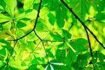 Fototapeta zielone liście 745 w sklepie internetowym Deco-Wall.pl