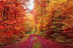 Fototapeta las jesienią 746a w sklepie internetowym Deco-Wall.pl