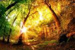 Fototapeta las jesienią 757a w sklepie internetowym Deco-Wall.pl