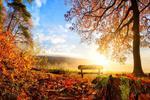 Fototapeta las jesienią 758a w sklepie internetowym Deco-Wall.pl