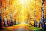 Fototapeta las jesienią 768a w sklepie internetowym Deco-Wall.pl