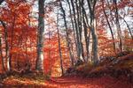 Fototapeta las jesienią 769a w sklepie internetowym Deco-Wall.pl