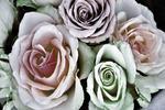 Fototapeta kwiat, róże 333 w sklepie internetowym Deco-Wall.pl