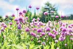 Fototapeta kwiat, kwiaty polne 364 w sklepie internetowym Deco-Wall.pl