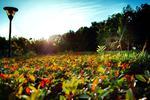 Fototapeta kwiat, łąka 367 w sklepie internetowym Deco-Wall.pl