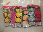 Róża Wielkokwiatowa (w kolorach) w sklepie internetowym Farmersklep