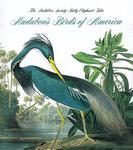 Audubon's Birds of America - Tiny Folio w sklepie internetowym Libristo.pl