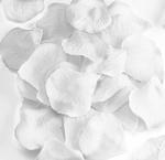 Płatki róż białe x1 w sklepie internetowym papierA4.pl