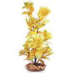 Boxwood marki Komodo - roślinka dekoracyjna do akwarium w sklepie internetowym EasyPet.pl