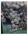 Winorośl SIBERA wiogrono sadzonki ZÓŁTE-ZIELONE w sklepie internetowym Alleogrodniczy