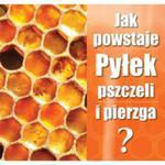 """Ulotka """"jak powstaje pyłek pszczeli i pierzga"""" w sklepie internetowym Pszczelnictwo.com.pl"""