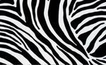 Folia-okleina dekoracyjna zebra 10133/11029/11031 w sklepie internetowym Profilms