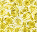 Folia okleina meblowa Gekkofix Roses Yellow 12858 w sklepie internetowym Profilms