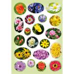 Naklejka kwiatki zielone w sklepie internetowym Księgarnia Dobrego Pasterza