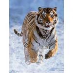 Puzzle 500 el. Tygrys w śniegu Ravensburger w sklepie internetowym Mazakzabawki.pl