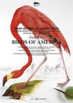 Audubon's Birds Of America w sklepie internetowym Gigant.pl