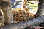 Bogata zimowa karma dla ptaków dzikich Ptasia Biesiada™ Premium 5kg w sklepie internetowym Rolmarket.pl