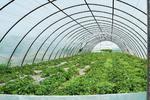 Polska folia tunelowa UV-4 - folia ogrodnicza na 4 sezony Foliarex 12x11m - 11m w sklepie internetowym Rolmarket.pl