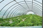 Polska folia tunelowa UV-4 - folia ogrodnicza na 4 sezony Foliarex 12x11m + GRATIS - 11m w sklepie internetowym Rolmarket.pl