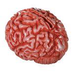 Skarbonka Mózg - Mózg w sklepie internetowym e-prezent.pro