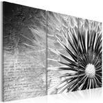 Obraz - dmuchawiec (czarno-biały) w sklepie internetowym Radimar