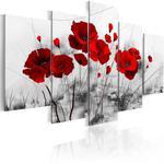 Obraz - Maki - Czerwony cud w sklepie internetowym Radimar