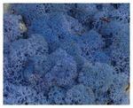 MECH Chrobotek Reniferowy Lavender Blue 2,5 kg mech na ścianę, mech norweski, lawendowy, niebieski w sklepie internetowym MyFlowers.pl