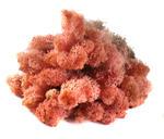 MECH Chrobotek Reniferowy 20.Pink mech na ścianę, mech norweski, różowy w sklepie internetowym MyFlowers.pl