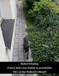 O kocie, który sam chadzał na przechadzkę. The Cat that Walked by Himself w sklepie internetowym Wieszcz.pl
