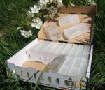 Zestaw 100 x Pudełko karton tekturowe do wysyłki matek pszczelich. w sklepie internetowym Apismart.eu
