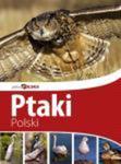 Ptaki Polski - Piękna Polska w sklepie internetowym Booknet.net.pl