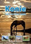Konie Suita na cztery kopyta w sklepie internetowym Booknet.net.pl