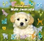 Maluch poznaje Małe zwierzęta w sklepie internetowym Booknet.net.pl