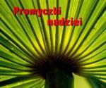 Promyczki nadziei. Perelka 141 w sklepie internetowym Booknet.net.pl
